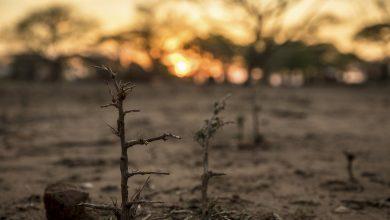 Photo of Борьба против изменения климата идет и в судах