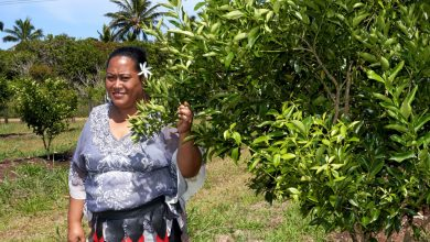 Photo of FROM THE FIELD: COVID crisis creates new wave of self-reliance for Tonga