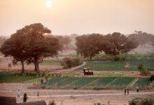 Photo of Участники саммита поддержали создание «Великой зеленой стены» в Африке