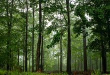 Photo of За последние тридцать лет утрачено около 420 млн гектаров леса