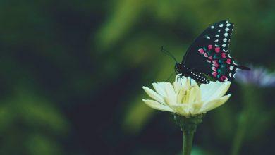 Photo of Как сделать торговлю объектами дикой природы безопасной для окружающей среды?