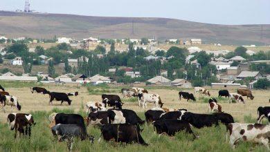Photo of Страны Центральной Азии развивают безвредное для климата животноводство