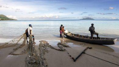 Photo of COVID-19 привел к серьезным потерям в рыбном секторе