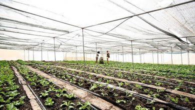 Photo of Сельское хозяйство никогда раньше не страдало от такого мощного воздействия стихийных бедствий