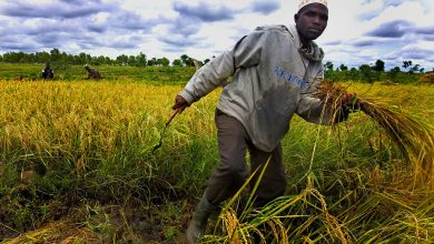 Photo of Free up 'bottlenecks' stifling Africa's agri-food sector – FAO chief