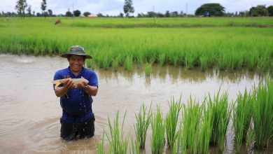 Photo of From the Field: Lao farmers serve up fish with rice